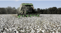 Sustainability in Greek Cotton